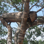 Farming: A Tanzanian Bee Hive